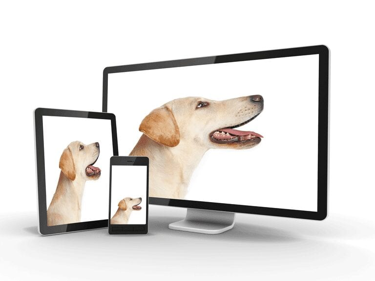 Nice Picture of Labrador Dogs on screens