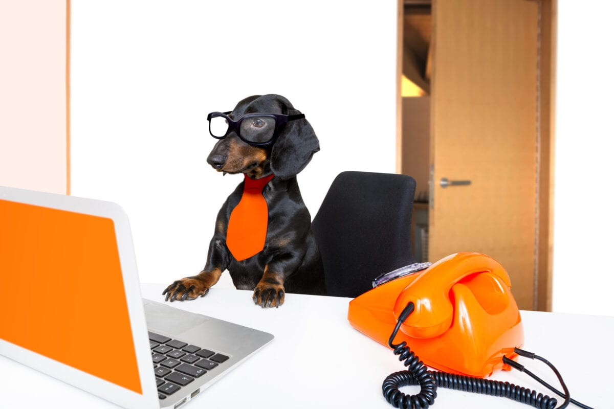 Picture of a dachshund on a laptop wearing glasses and a tie