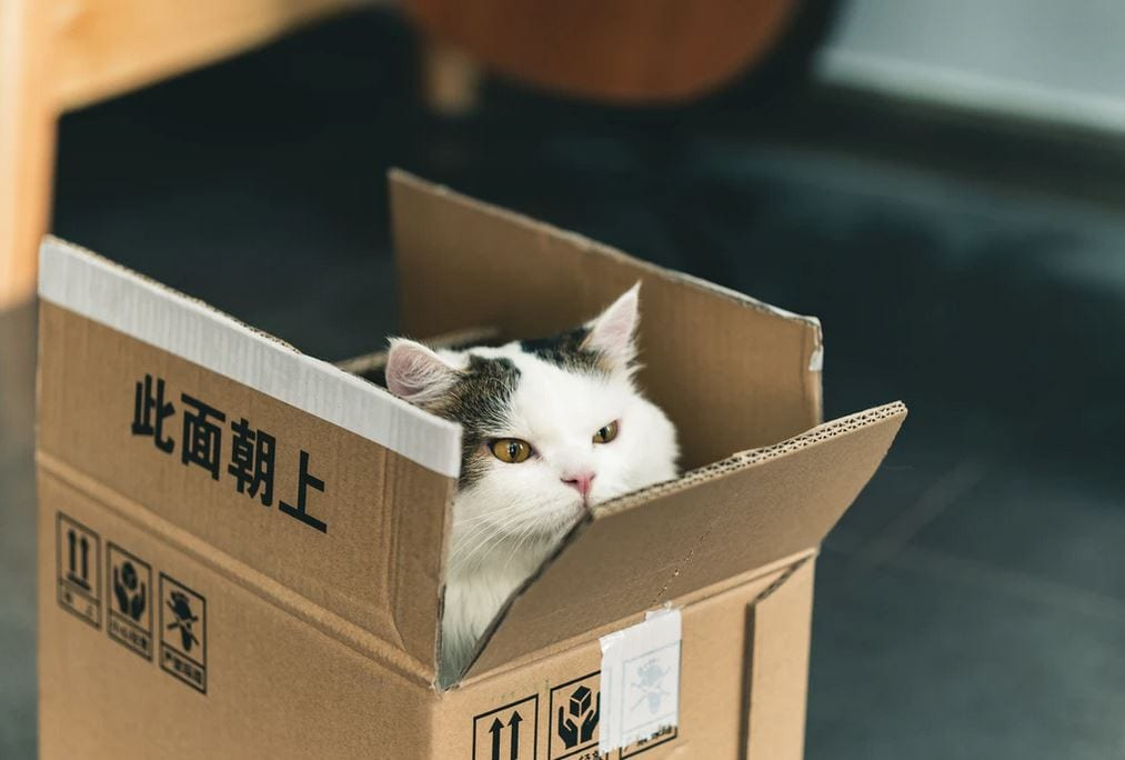 a cat in a box to imply someone bought a top and ended up with a cat